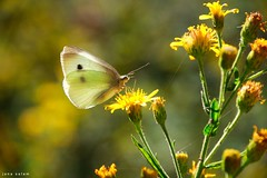 #spring #springtime #Butterfly #beauty #nature_photography #nature #naturelovers #macro_photography #photo_art #photography #photooftheday #flickr #explore (salam.jana) Tags: spring springtime butterfly beauty naturephotography nature naturelovers macrophotography photoart photography photooftheday flickr explore