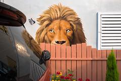Lion (Jeffrey De Keyser) Tags: street streetphotography lion car color fuji eyes incheon korea