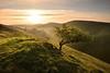 A Popular Tree (Andrew Mowbray) Tags: ectonhill whitepeak peakdistrict peakdistrictnationalpark limestone staffordshire walkinginstaffordshire mainfold