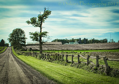 Empty Road (HFF) (13skies) Tags: tree road countryroad country countryside out outandabout fence woodenfence horizon gravelroad grass field sonya57 happyfencefriday fencefriday bluesky clouds distance farming farm work travel 13skies shooting daytripping