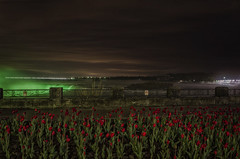 Sweet Geezus (Paul B0udreau) Tags: paulboudreauphotography ontario niagara canada nikkor1855mm photoshop d5100 nikon nikond5100 raw layer lights nighttime niagarafalls tripod flowers tulips red longexposure water bandodekvar