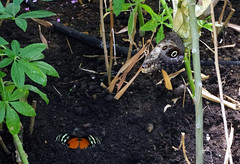 IMGP9127 (Steve Guess) Tags: museum horniman forest hill london england gb uk butterflys butterflies house flowers