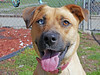 Lovey (4) (AbbyB.) Tags: dog canine rescue adopt animal shelter pet mtpleasantanimalshelter easthanovernj petphotography shelterpet