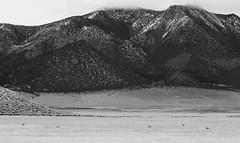 Greater Sage-Grouse Lek (Jonah Benningfield) Tags: lilpump tekashi69 b big bird thicc zucc chicken clickbait zoinks