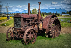 Tulips of the Valley Festival - McCormick-Deering Tractor (SonjaPetersonPh♡tography) Tags: chilliwack tulipsofthevalleyfestival tulips tulipfields tulipfestival bc britishcolumbia canada fraservalley tulip festival nikon nikond5300 scenery scenic views farmequipment