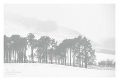 Beecraigs (NorthernXposure) Tags: beecraigs landscape snow winter woodland