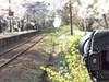 A train shooter (しまむー) Tags: sony cybershot dscf828 carl zeiss variosonnar t 7151mm 28200mm f228 sakura festa ashino park goshogawara aomori