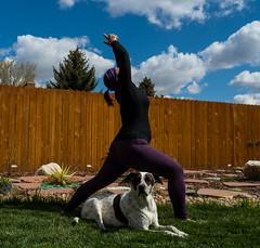 17/52 Rylee and Warrior 1 pose (d2roberts) Tags: yoga 52weeksfordogs 1752 mutt adopt heinz57 windsorfamilyyoga windsorroottogrow