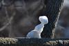 Coffee-cup snowmen, Minnehaha Park (schwerdf) Tags: art minneapolis minnehahapark minnesota snow snowmelting snowmen
