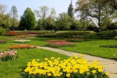 Grugapark (Eichental) Tags: essen frühling gruga grugapark tulpen