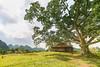 _Y2U8374.1113.Đình Nông Lục.Bắc Sơn.Lạng Sơn (hoanglongphoto) Tags: asia asian vietnam northvietnam northeastvietnam landscape scenery vietnamlandscape vietnamscenery vietnamscene tree pagoda house home bacsonlandscape canon canoneos1dx đôngbắc lạngsơn bắcsơn phongcảnh phongcảnhbắcsơn cây nhà ngôinhà đình đìnhnônglục bãicỏ zeissdistagont3518ze hưngvũ grass sunlight sunny afternoon sunnyafternoon nắng buổichiều nắngchiều sky bầutrời