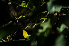 Butterfly (Den=) Tags: nicaragua fuji fujixt2 fujifilm ometepe