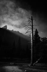 Dead Tree (oneworld72) Tags: deadtree yosemitenationalpark yosemite yosemitevalley sonya7rii batis25mmf2 blackwhite