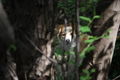 io ti vedo (stefano6712) Tags: allaperto natura bosco passeggiata animali cani dog woods nature trees outdoor canoneos450ditalia