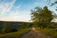 Sur le chemin (Nathalie Falq) Tags: aveyron france midipyrenees mouret occitanie campagne chemin formatpaysage paysage fujifilmxt2 xf1855mmf284rlmois fujifilm