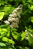 IMG_5548 (Geoff_B) Tags: bristol badockswood walkinthewoods woodland woodlandwalk spring unprocessed