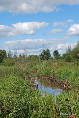 Волинське болото InterNetri Ukraine 16