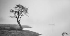 Gale Bay, Ullswater (►►M J Turner Photography ◄◄) Tags: galebay ullswater lakedistrict cumbria england uk unitedkingdom mist fog dawn morning unesco worldheritagesite unescoworldheritagesite nationaltrust
