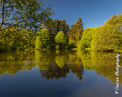 Early morning stillness (cee live) Tags: germany taunus lakes landscape water morning cloudless trees flickr canon reflection still spring