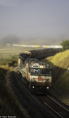 A foggy start (Dylan B`) Tags: qld queensland 6mb9 sct train freight locomotive railway fog sunrise grass trees container
