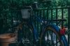 IMG_2532 (Aaron Belcher) Tags: savannah georgia scad nature aesthetic canon photography college art design