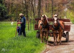 Fixing Fences (James Korringa) Tags: amish farmer horses worker