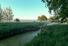 zum Sonnenaufgang (K-PIXEL-N) Tags: ngc natur wasser moor morgen sonnenaufgang teich see outdoor gifhorn viehmoor sonne gras baum himmel landschaft boot fluss foto feld nebel landstrase wald holz heiter berg