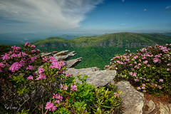Hawksbill Mountain II (Reid Northrup) Tags: rrs nature clouds forest hawksbillmountain landscape linvillegorge mountain nikon northcarolina rhododendrons rocks trees reidnorthrup
