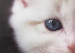 Cat's eye (pwscrystal) Tags: cat cateye