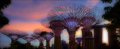 Sunset over the Golden Towers (kate willmer) Tags: towers buildings architecture sunset clouds garden singapore
