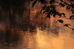 River Sunset (Tim Aldworth) Tags: elephantnaturepark eos7d thailand chiangmai elephant elephants reserve sanctuary rescue rescuecentre gold sunset sundown golden water