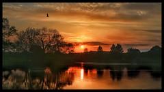 Sunset over the dam heron fly by (jamiekennedy644) Tags: sunset dam wildlife heron canon6d 50mmfullframe reflection sky clouds peepingthrough trees rspb