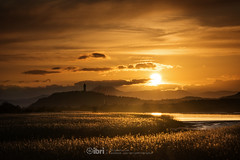 Cambus - 10 May 2018 - 64 (ibriphotos) Tags: dogwalk onetree warm wallacemonument river benledi cambus riverforth sunset summer spring aroundtheforth clackmannanshire evening goldenhour sky sunsets