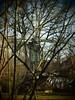 Windmill (Pico 69) Tags: windmühle museumsdorf bäume äste natur pico69
