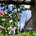 Klostergarten Cimiez, Nizza, Frankreich
