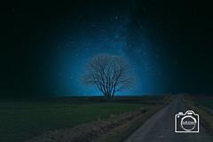 22.05 18 Alone Tree (DJR-FOTO) Tags: affinityphoto awsome awesome landscape landschaft natur nature night nacht nice noflash tree stars manipulation