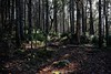 Path In The Woods (jonfromnsca) Tags: trees riverbank sunbeams shadows leaves litter tranquility foreststand slope aspect density canopy understory regeneration light