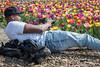 Capturing tulips (glukorizon) Tags: 52weeksof2018 bloem camera cap colourful field flower fotoapparatuur fotocamera fotograaf fototoestel gemeentehuis kleurig kleurrijk laying liggen man municipaloffice pet photocamera photographer photographingaphotographer plant tulip tulp veld candid straatfotografie