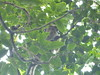 P1050912 (toonflick) Tags: sri lanka tea kandy colombo marissa blue whales elephants monkeys temples buddhism sinhalese ceylon