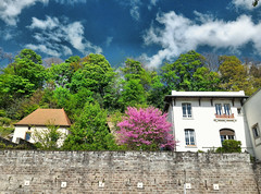 Epinal (denismartin) Tags: grandest denismartin spring vosgesmountain vosges france lorraine tree epinal moselle moselleriver sky cloud hdr garden