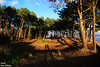 Pure nature (Ismael Owen Sullivan) Tags: galicia riasbaixas miño playa del molino nature nikon d5300 aguarda europa europe españa pontevedra naturaleza natural bosque sombras travel tree shadow