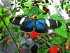 Butterfly (skipmoore) Tags: sanfranciscocalifornia academy science butterfly