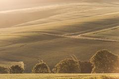 Licht und Schatten (Karsten Höhne) Tags: lippe landschaft nebel dunst licht bäume