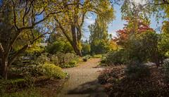 Fall (briantolin) Tags: fall autumn foliage deerlakepark golden orange yellow walkingpath path park burnaby