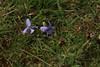 IMG_1970 (monika.carrie) Tags: monikacarrie wildlife scotland glenesk