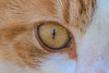 Katzenauge (M_Nix) Tags: katze auge spiegelung nahaufnahme