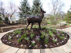 Lombard, IL, Lilacia Park, Spring, Rastus, the Cast Iron Deer (Mary Warren 13.6+ Million Views) Tags: lombardil lilaciapark nature flora spring plants blooms blossoms flowers art sculpture bronze deer trees bluespruce