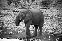 IMG_3213 (tregnier) Tags: namibia roadtrip africa travel desert animals sossusvlei leopard cheetah lion solitaire trip