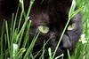 "Miss ""Eve"" _ Cat's eyes (Prilla 4.0) Tags: cat eyes gatto occhi animal animale eve canonsx540 canon erba prato felini feline friend amico"