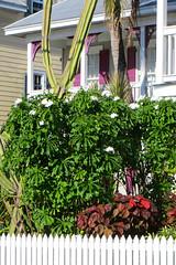 Key West (Florida) Trip 2017 7680Ri 4x6 (edgarandron - Busy!) Tags: florida keys floridakeys keywest house houses